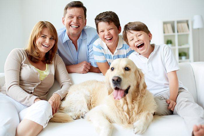 Labrador Familienhund