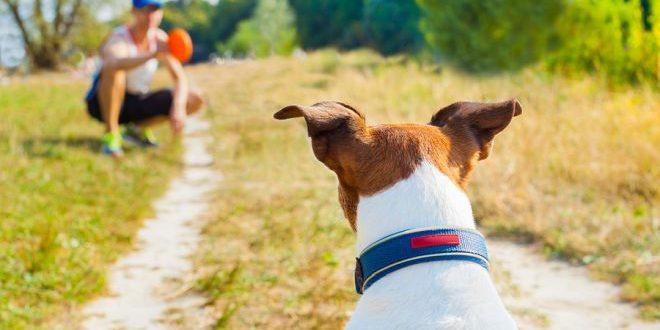 Hund spielt Ball mit Herrchen