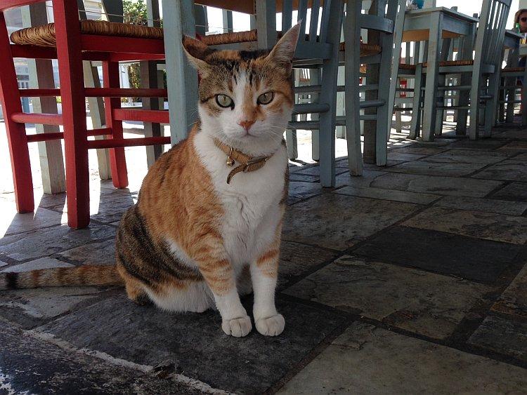 strassenkatzen-naxos-1