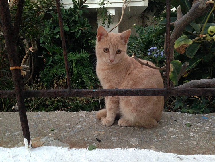 strassenkatzen-naxos-2