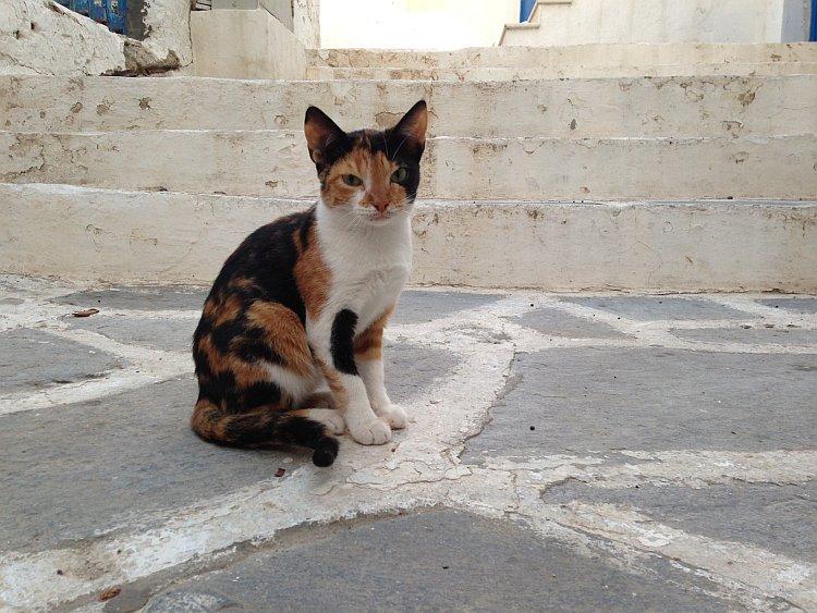 strassenkatzen-naxos-4