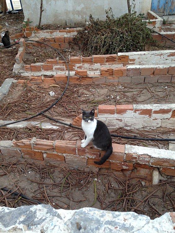 strassenkatzen-naxos-5