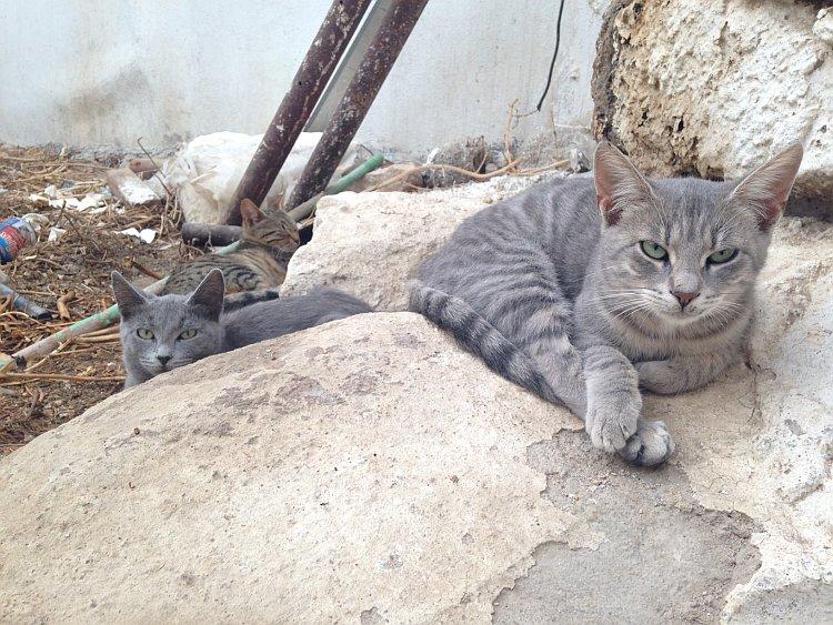 strassenkatzen-naxos-8