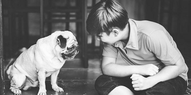 Junge mit Mops