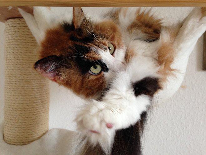 Katze relaxed in Hängematte