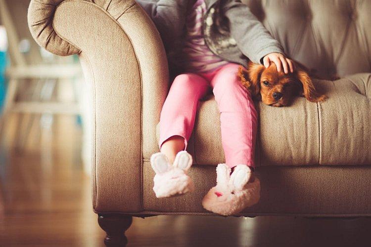 Hund liegt auf Sofa und wird gestreichelt