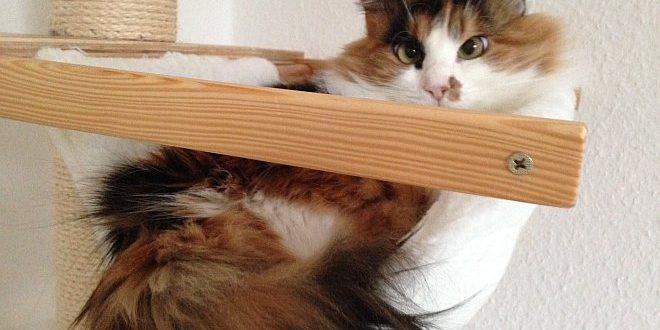Katze liegt in Hängematte