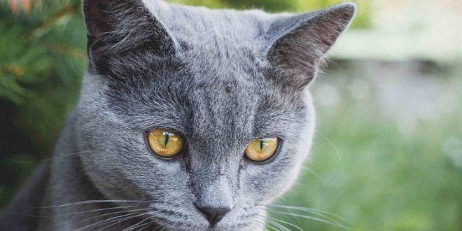 ohrmilben bei katzen richtig behandeln tipps f r katzenhalter. Black Bedroom Furniture Sets. Home Design Ideas
