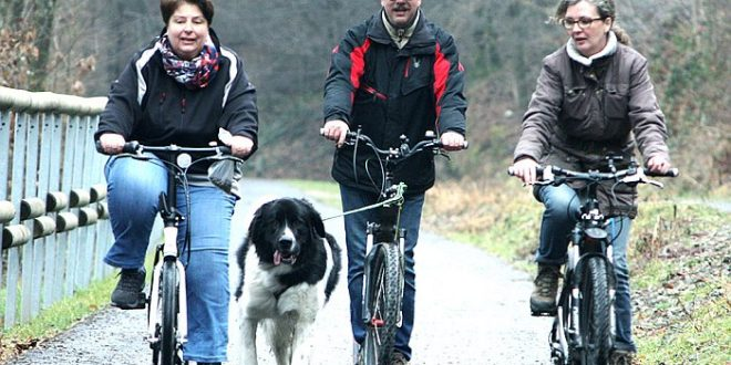 Dogscooter lernen
