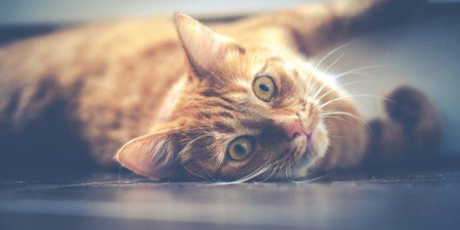 Katze rollt sich auf dem Boden