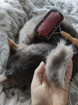 Lästige Katzenhaare