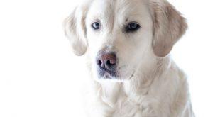 nieren-leber-erkrankungen-hund