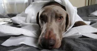 Hund hat Verstopfung