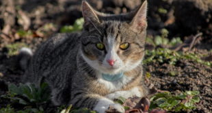 Peilsender Katze
